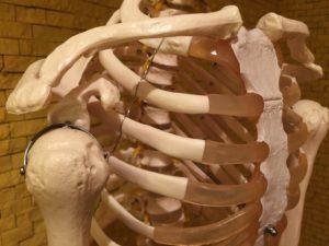 人体のイメージ画像