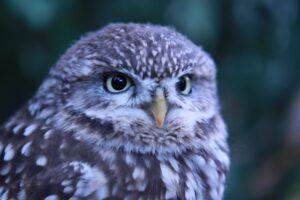 フクロウのイメージ画像